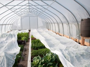 Пример дополнительной защиты растений от ночного мороза в плёночной теплице